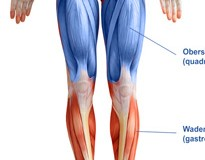 Vorderer Oberschenkelmuskel